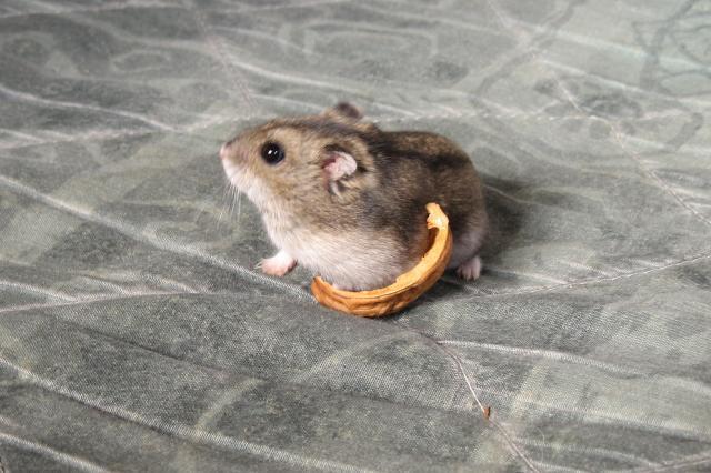 http://www.hamsteracademy.fr/forum/uploads/281365_img_2197.jpg