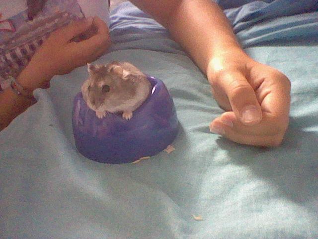 http://www.hamsteracademy.fr/forum/uploads/324317_hni_0036.jpg