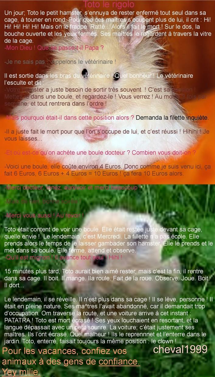 http://www.hamsteracademy.fr/gazette/5/11.jpg