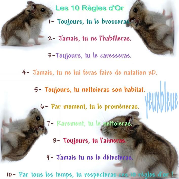 http://www.hamsteracademy.fr/gazette/5/7.jpg