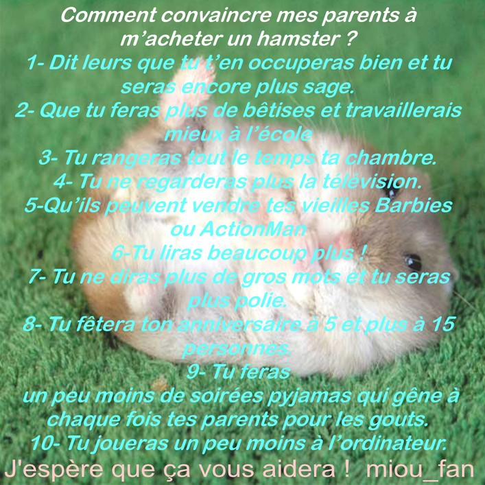 http://www.hamsteracademy.fr/gazette/5/8.jpg